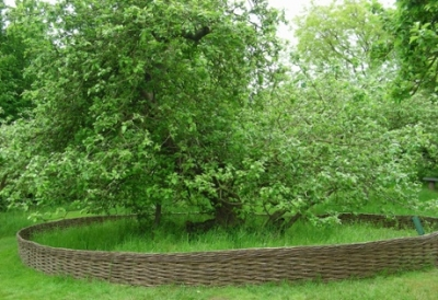 Newton's Apple Tree, Woolsthorpe Manor, Lincolnshire Photograph: Ann Moynihan/National Trust